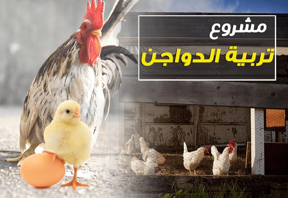 دراسة جدوى حول مشروع تربية الدواجن الدجاج الحمام الطيور