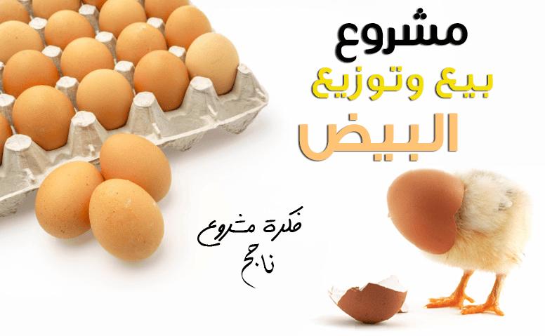 دراسة جدوى مشروع تاجر موزع البيض - بيع وتوزيع بيض الدجاج