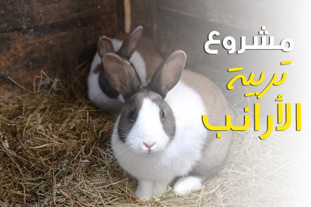 دراسة جدوى مشروع تربية الأرانب في المنزل